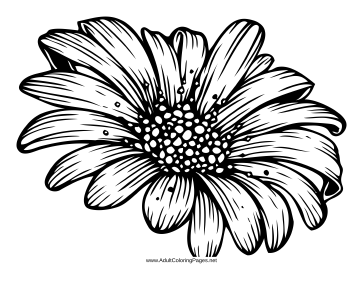 daisy coloring book pages - photo#32